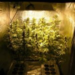 Best 4x4 grow tent - title