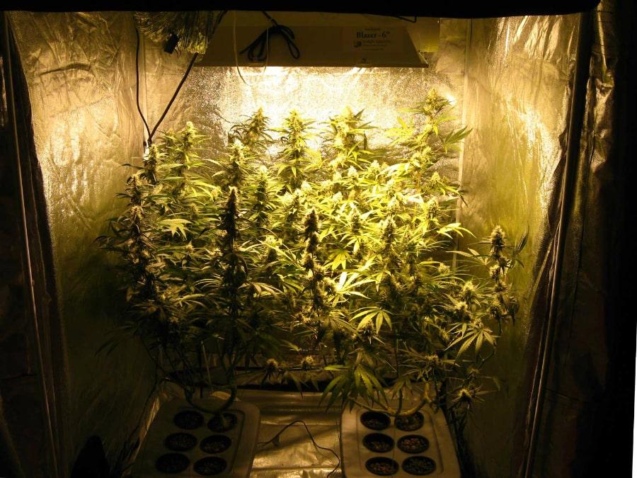 Best 4x4 grow tent - title