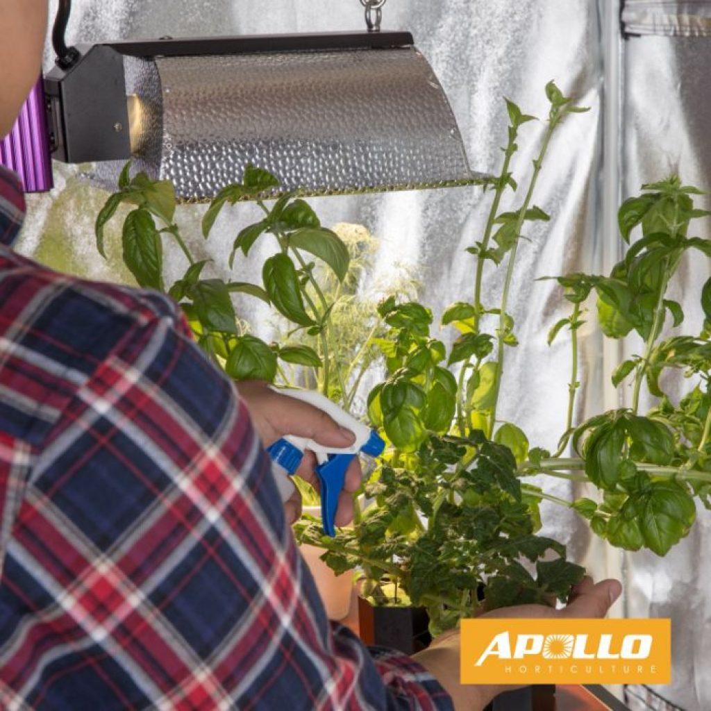 Apollo horticulture 48x48x80 - photo 4