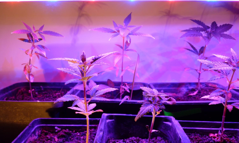 Best led 300v grow light title