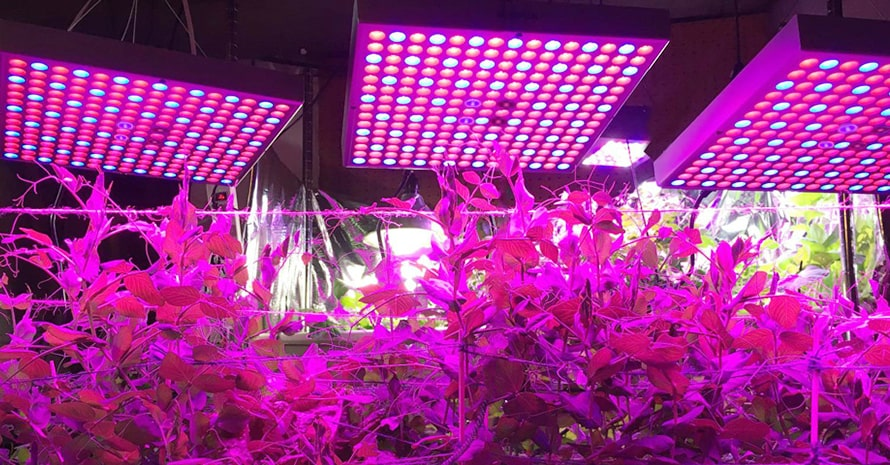 45W LED Grow Light for Indoor