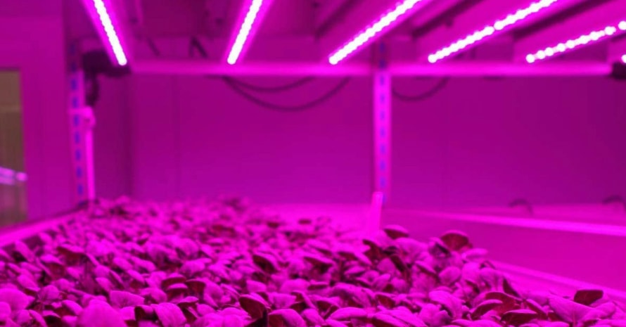 Byingo 4ft LED Grow Light