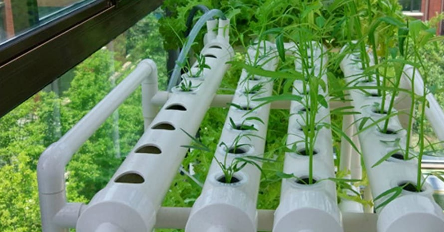 LAPOND Hydroponic Grow Kit