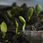 Super Soil Organic Concentrate