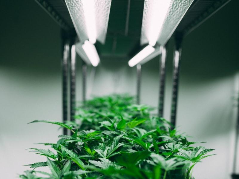 green-plant-in-white-pot