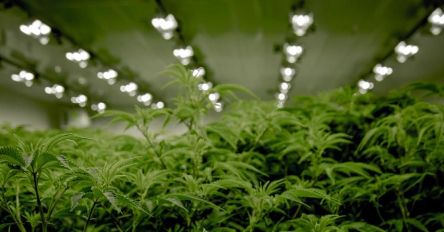 growing hall with lights