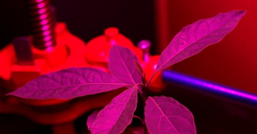 plant under led light