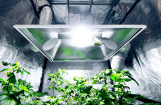 Best 10×10 Grow Tent: Recommendations on Choosing the Right One
