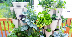 Hydroponic Tower: All You Need to Know