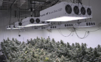 Best 1000 Watt LED Grow Light for Growing Cannabis: In-Depth Review