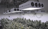 Best 1000 Watt LED Grow Light for Growing Cannabis: In-Depth Review