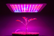 Best 1200 Watt Led Grow Light for Growing Cannabis Effectively
