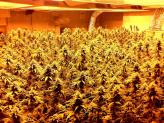 Best 2000 Watt LED Grow Light for Growing Cannabis Indoors