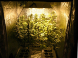 Best 4×4 Grow Tent: Top 6 Options to Check Out