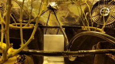 Best Fan for Grow Tent: Choosing the Most Appropriate One