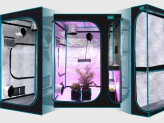 Best Small Grow Tent: What Is a Good Tent Be Like?