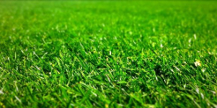 Lawn care: 10 useful tips for growing a beautiful turf