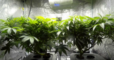How to Increase Humidity in Grow Tent – What You Need to Know