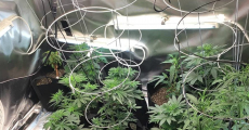 Reflective Material for Grow Room: Choose Your Best Reflectors