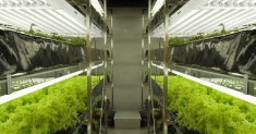 Best T5 Grow Lights: My Favorite Picks for Your Cannabis