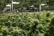 Best 5×5 Grow Tent for Cannabis: an Expert's Overview