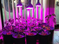 Best Grow Light Bulbs Reviews — Brighter Than The Sun