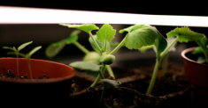 400W LED Grow Light: Best Deals & Tips for Buying